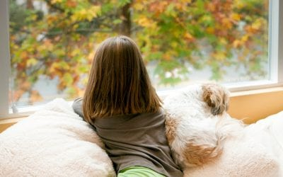 3 Reasons to Get Replacement Windows in the Fall